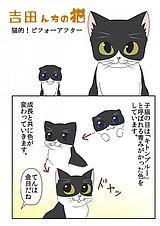 吉田んちの猫 第15話