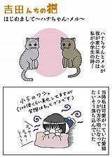 吉田んちの猫 第2話