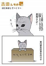 吉田んちの猫 第3話
