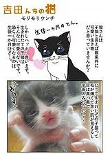 吉田んちの猫 第7話