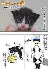 吉田んちの猫 第10話