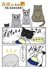 吉田んちの猫 第11話